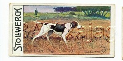 DOG Pointer English Pointer Hunting, Antique 1890s Trading Card