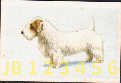 DOG Sealham Terrier, Small German Trading Card Tobacco Card 1933