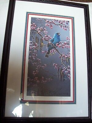 Larry Zach picture for Indigo Bunting Redbud.  Professionally framed.