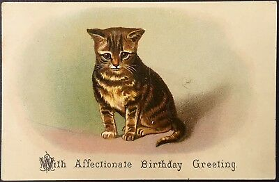 Victorian Card ~ Cute Brown Striped Kitten ~ Affectionate Birthday Greeting
