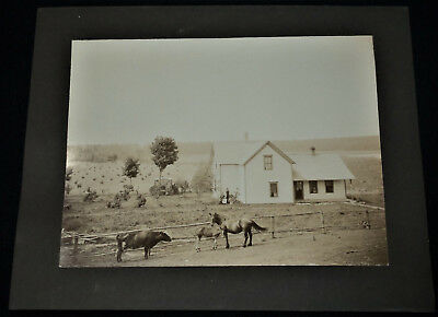 Vintage dated 1905 Large Mounted Photo of Farm Family w/Animals & Guitar