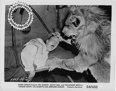 Lion eating Huntz Hall still The BOWERY BOYS in JUNGLE GENTS (1954) #34 origVINT