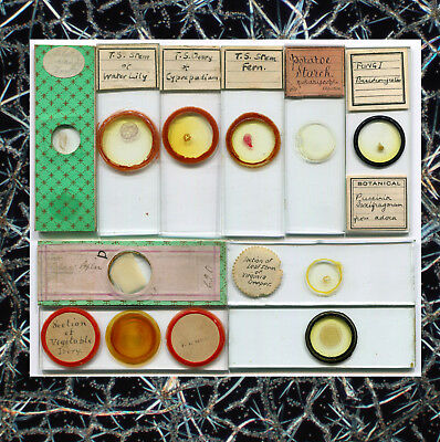 10 Microscope Slides of Botanical Subjects, Various Makers