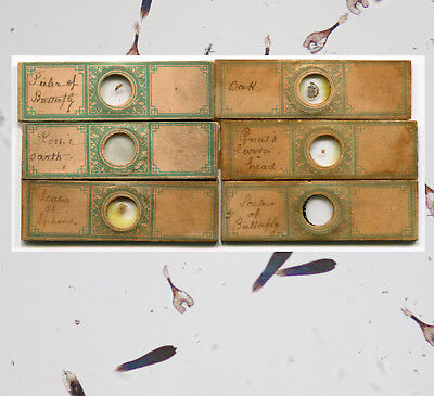 6 Small Bourgogne-Attributed Microscope Slides