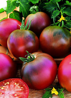 Vegetable - Tomato - Black Russian - 100 Seeds #1676