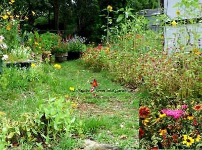 Southeast Wildflower Mix Seeds by Zellajake Many Sizes Bulk South East Blooms S3