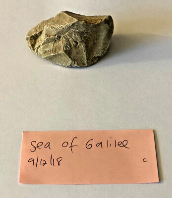 Natural Rock From The Sea Of Galilee Israel, Free Shipping, Buy 2 Get 1 Free!!!