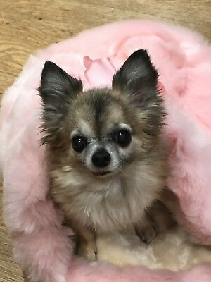 Chihuahua Dog Pet Bed Baby Pink Luxury Faux Fur Snuggle Sack Puppy Bag 🇬🇧🇬🇧