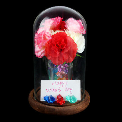 5×Large Glass Display Cloche Bell Jar Dome with Wooden Base Stand Cover Vintage
