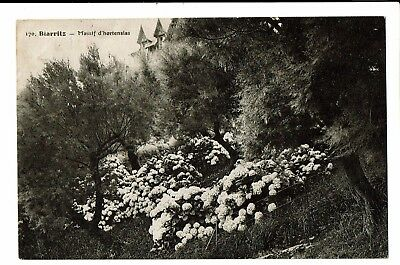 CPA- Carte postale -FRANCE--Biarritz - Massif d'Hortensias -S3941