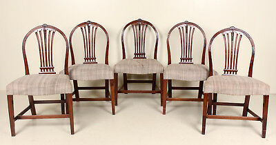 5 Antique George IV Chairs Mahogany Georgian Hoop Backs