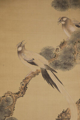 """JAPANESE HANGING SCROLL ART Painting """"Birds on Pinetree"""" Asian antique  #E4271"""