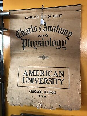 Late 1800's Anerican University Charts Of Anatomy And Physiology
