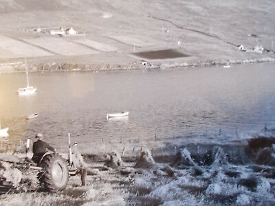 Scalloway Crofter in the Corn with MF tractor rare photo by C.J. Williamson