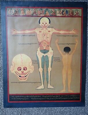 Medical Thangkas of the Blue Beryll Anatomy - Anterior View