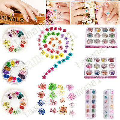 Multi Different Pattern Dried Dry Flower for UV Gel Acrylic Tips Nail Art Decor