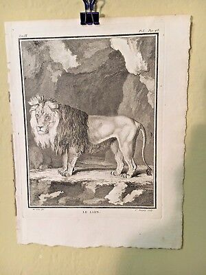 18Th Century Steel Engraving Of A Lion