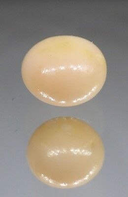Conch Pearl (Beige ), Weight: 1.20 carat