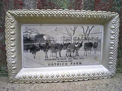 """Antique 1912 Tin Litho Advertising Tray OSTRICH FARM Ostriches in Snow 5"""" x 3"""""""