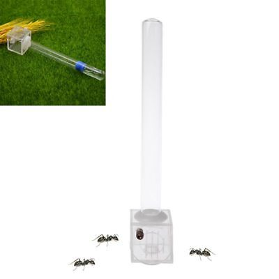 Glass Tube Ant Water Feeder With Active Zone Ants Farm Acrylic Insect Nest House
