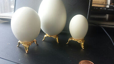 BLOWN GOOSE EGGS :   12 * 8.5-8.9 Single Hole Free Shipping! Very clean.