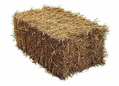 Barley Straw Full Conventional Handy Small Bale - 100x50x40cm - Feed Quality Pet
