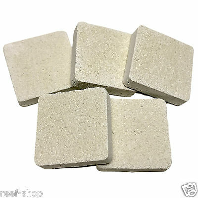 5 Cured Reef Frag Tiles Live Coral Propagation Free USA Shipping