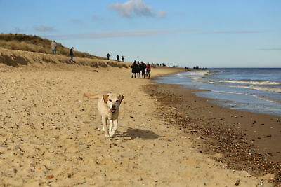 Feb. short break 15th - 18th at Norfolk dog friendly holiday cottage Sandy beach