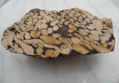 500g Peanut wood end petrified fossil mineral specimen collection lapidary HL131