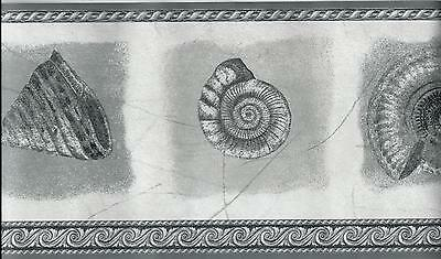 Black and White Grey Sea Shell Seashell Textured Wall paper Border EH99845