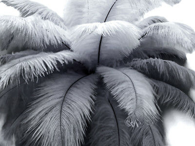 """10 Pieces -14-17"""" Silver Gray Ostrich Dyed Drab Body Feathers Centerpiece Supply"""