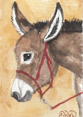 ACEO original Watercolor Art Card Horse Standard Donkey Brown in red rope halter