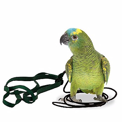 The Aviator Parrot Harness - Small - Amazons, Cockatoos, Conures - 7 Colours