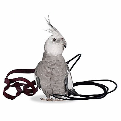 The Aviator Parrot Harness - Petite - Cockatiels, Conures,Green Cheek- 4 Colours