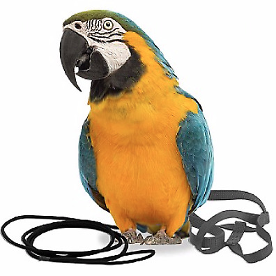 The Aviator Parrot Harness - Large - Macaws, Cockatoos, Moluccans - 7 Colours