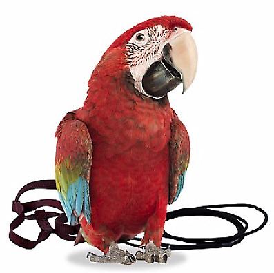 The Aviator Parrot Harness - XLarge - Macaws, Cockatoos, Hyacinths - 7 Colours