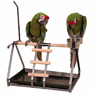 Antique - Tabletop Parrot Stand with Toy Hanger and Feeder - Portable Table Top