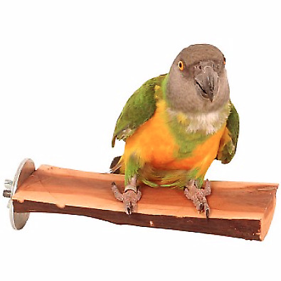 Manzanita Wood Flat Parrot Bird Perch - Small - Strong Tropical Hardwood - NTO