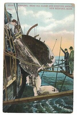 Right Whaling Head Clear & Hoisting Aboard New Bedford Mass. Unused Postcard