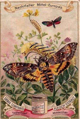 Vintage Trade Card Moth Liebig's Beef Extract 1800-90.*