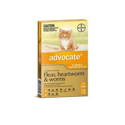 NEW Advocate For Kittens & Small Cats Up To 4Kg Orange 6 Pack