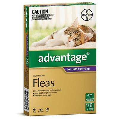 NEW Advantage For Cats Over 4kg Purple 6 Pack