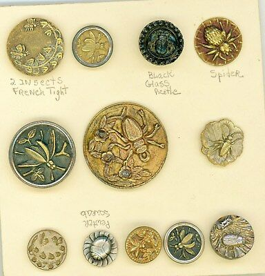 A variety of 12 insect buttons.