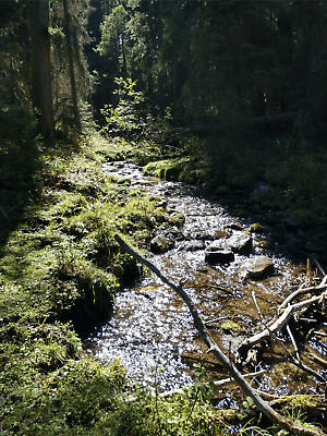 GOLD MINE Historic Gold Creek MT Pike's Gold #4 20 Acre Gold Mining Claim