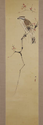 "JAPANESE HANGING SCROLL ART Painting ""Hawk on tree"" Asian antique  #E5744"