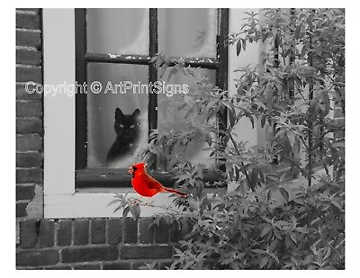Red Cardinal Cat in Window Photo Art  Print B&W Bedroom Bathroom Picture w/Mat
