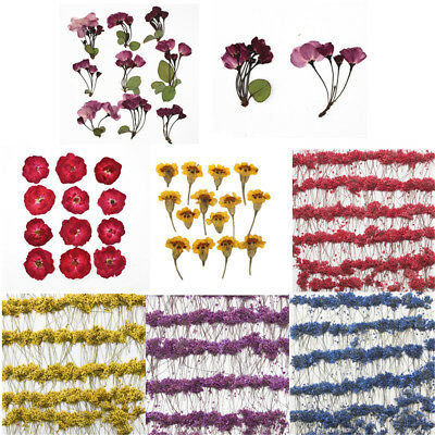 2 Pack Real Pressed Flower Dried Flowers for Arts Crafts Resin Jewelry Making