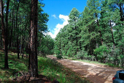 Half-Acre Residential Lot Timberon, New Mexico Surrounded by National Forest