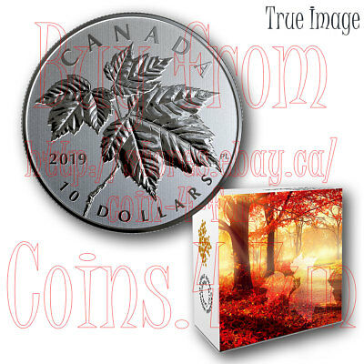 The 2019 Maple Leaf - $10 1/2 OZ Pure Silver Specimen Coin