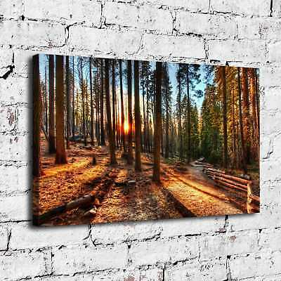 "12""x20"" A path in the woods HD Canvas Print Painting Home Decor room Poster Wall"